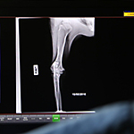 Caringbah Vet Hospital digital x-ray of a dog's leg.